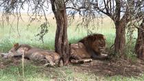 6 days Safari Programe, Arusha, Cultural Tours