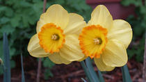2-Day Tour of Nantucket Including the Annual Daffodil Festival, Manchester