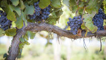 Help Fulchino Vineyards Bring In The Harvest, Boston, Day Trips