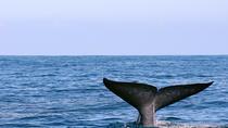 Whale Watching Tour in Mirissa from Hikkaduwa, Hikkaduwa, Cultural Tours