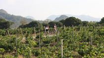 2-Day Tour Cycling Khao Yai Wine Trails from Bangkok, Bangkok, Bike & Mountain Bike Tours