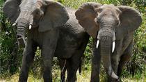 3 Day Murchison falls wildlife safari, Kampala, Cultural Tours