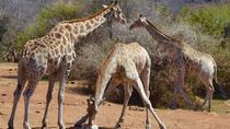 Classic Pilanesberg Nature Reserve Safari, Johannesburg, Private Sightseeing Tours