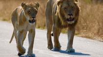 Full - Day Pilanesberg National Park Safari, Johannesburg, Attraction Tickets