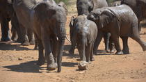 Pilanesberg National Park Safari and Sun City Casino, Johannesburg, Attraction Tickets