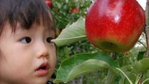 Hiroshima Apple Picking - All you can eat, No time limit ! Yamaue Apple Farm, Hiroshima, Food Tours
