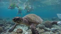 Snorkeling Safari, Malé, Snorkeling