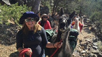 Take a Llama to Lunch! Wilderness Day Hike, Taos, Hiking & Camping