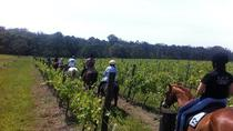 Wine Tour - Horse Riding Tour in the Vineyards, Lisbon, Wine Tasting & Winery Tours