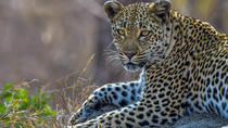 5-Day 4-Nights: Private Kruger National Park tour with 2 guides from Skukuza Airport, Kruger...
