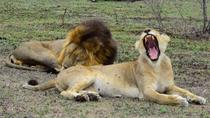 Private 5-Day Overnight Safari In Kruger Park from Skukuza Airport, Kruger National Park, Private ...