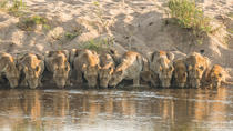 Private Full-Day Guided Safari Tour from Hazyview, Kruger National Park, Private Day Trips