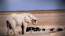 4-Day Etosha And Swakopmund Adventure from Windhoek, Windhoek, Multi-day Tours