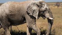 6-Day Dunes and Wildlife Tour from Windhoek, Windhoek, Multi-day Tours