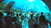 Small Group Half Day Trip to Georgia Aquarium, Atlanta, Attraction Tickets