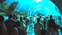 Visite en petit groupe d'une demi-journée au Georgia Aquarium, Atlanta, Billetterie attractions