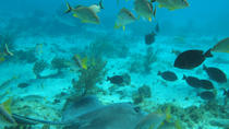 Stingray City and Snorkel Tour With Lunch, Cayman Islands, Snorkeling