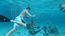 Stingray City Experience Plus Two Snorkeling Stops, Cayman Islands, Snorkeling