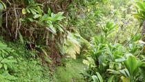 El Yunque Rainforest Adventure from San Juan, San Juan, Hiking & Camping