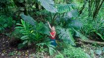 El Yunque Rainforest and Bio Bay All-Day Tour, San Juan, Day Trips