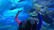 Antalya Aquarium including Hotel Pickup, Antalya, Attraction Tickets