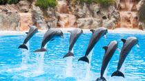 Aqualand and Dolphinarium 1-Day Ticket, Antalya, Water Parks