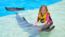 Dolphin Show and Swim with Dolphins Option, アランヤ