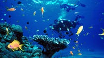Full Day Diving Tour in the Mediterranean from Side with Lunch, Belek, Scuba Diving