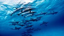 Discover Red Sea: Wild Dolphin Habitat Snorkeling Trip From Marsa Alam, Marsa Alam, Swim with ...
