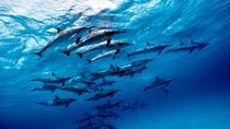 Discover Red Sea: Wild Dolphin Habitat Snorkeling Trip From Marsa Alam, Marsa Alam, Swim with...