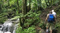 El Yunque National Forest Half Day Tour, San Juan