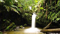 El Yunque Rainforest Hiking Adventure, San Juan