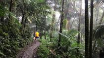 Private Tour of El Yunque National Rainforest, San Juan, Private Sightseeing Tours