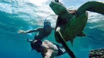 Vieques Snorkeling Tour from San Juan, San Juan, Snorkeling