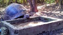 Mauritius History and Eco Tour: Ile aux Aigrettes Nature Reserve - Blue Bay Beach - Historic...