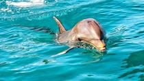 Nature Discovery Tour: Wild Dolphins, Giant Tortoises, Crocodiles and The Wild South, Port Louis, ...