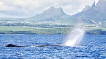 Swim With Wild Dolphins & Whale Watching With Breakfast & Transport, Port Louis, 4WD, ATV & ...