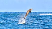 Swim with Wild Dolphins Including Breakfast & Hotel Pickup & Dropoff, Port Louis, Day Cruises