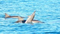 Swim with Wild Dolphins on Benitiers Island: Day Tour from Grand Riviere Noire, Port Louis