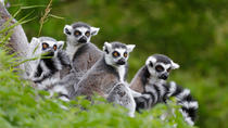 Full-Day Antananarivo, Ambohimanga and Lemurs Park Private Tour, Antananarivo, Private Sightseeing ...