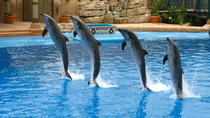 Dolphin Show at the Dubai Creek Park, Dubai, null