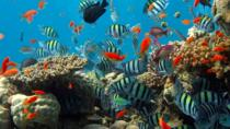 Cozumel Shore Excursion: Snorkel reefs, Playa Mia beach & water park with buffet, Cozumel, Ports of ...