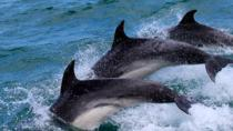 Gibraltar Shore Excursion: Small Group Dolphin Watching Safari, Gibraltar, Ports of Call Tours