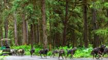 Juneau Shore Excursion:Sled Dog Discovery & The Famous Musher's Camp, Juneau, Ports of Call Tours