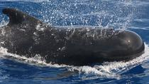 Tenerife 3-Hour Whale- and Dolphin-Watching Private Luxury Sailing Charter, Tenerife, Sailing Trips