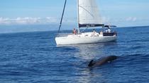 Whale and Dolphin Watching 3 hour Shared Sailing Yacht Charter, Tenerife