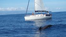 Whale and Dolphin Watching Sailing Yacht Small Group Charter, Tenerife
