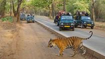 2 Nights 3 Days Jungle Safari in Bandhavgarh with Hotel and All Meals, Madhya Pradesh, Cultural...