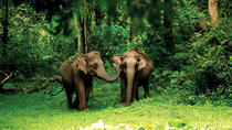 3 Days Calicut to Wayand Jungle Tour with Hotel and Transfers, Kochi, Cultural Tours