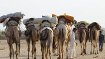 6-Day Private Royal Rajasthan Tour from New Delhi with Desert Camel Safari, New Delhi, Multi-day ...